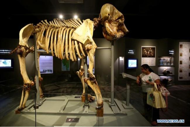 พม่าเปิดพิพิธภัณฑ์ช้างแห่งแรกในย่างกุ้ง พร้อมเผาทำลายงาช้างผิดกฎหมายในวันสัตว์ป่าโลก