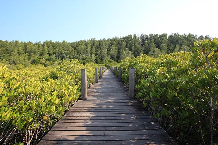 สะพานไม้ทอดยาวในทุ่งโปรงทอง