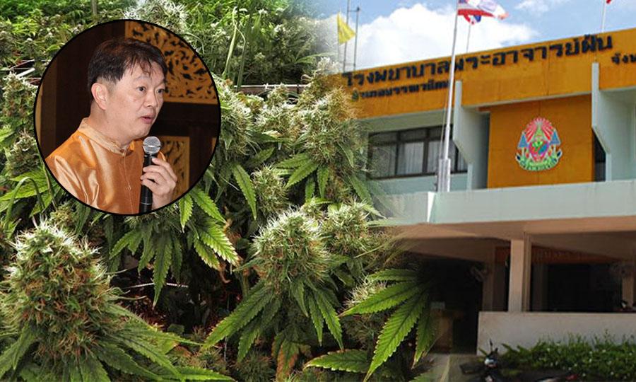 กรมแพทย์แผนไทย ลุยผลิต 16 ตำรับยากัญชาไทย ไม่คิดค่าใช้จ่าย คาดปลูกที่สกลนคร เม.ย.