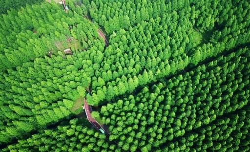 จีนเดินหน้าปลูกป่าใหม่เพิ่ม 693,000 ตารางกิโลเมตรจนกลายเป็นประเทศที่ปลูกป่าใหม่ที่ใหญ่ที่สุดในโลก (ภาพเอเอฟพี)