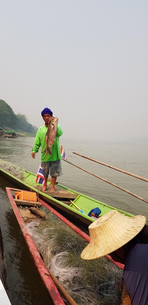 ชาวประมงจับปลา เอิน ได้จากการไหล มอง โดยจำหน่ายได้ในราคากิโลกรัมละ 300 บาท