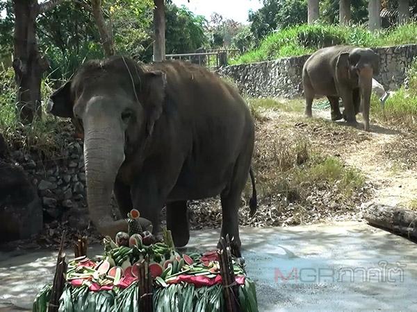 สวนสัตว์สงขลาจัดเลี้ยงบุฟเฟต์อาหารช้าง เนื่องในวันช้างไทย