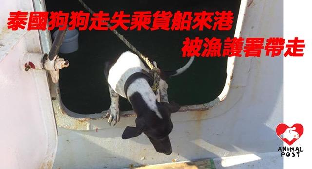 """ไม่ได้กลับแล้วบ้านแล้ว! """"น้องหมา""""ติดเรือสินค้าไปฮ่องกง ถูกการุณยฆาตแล้ว"""