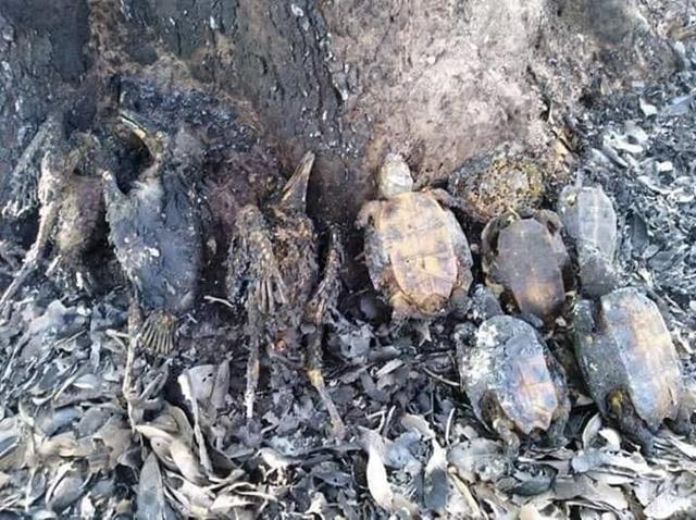 สลด! ไฟป่าทำพิษ พบซากสัตว์ป่าถูกเผาตายเกลื่อน วอน ทุกภาคส่วนช่วยกันดูแล
