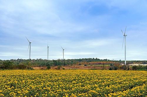 """วินด์"""" ทำได้ตามสัญญา-ขึ้นเบอร์1ขายไฟพลังลมครบ 8 โรง 717 MW"""