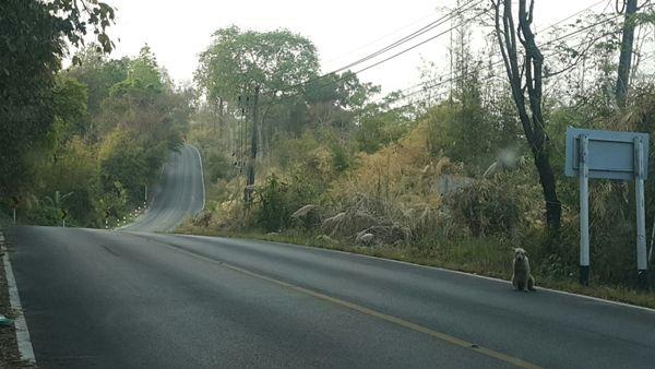 สุดสะเทือนใจ!คนแห่แชร์ภาพหมานั่งรอเจ้าของริมถนนน่านกว่า 4 เดือนไม่ยอมไปไหน