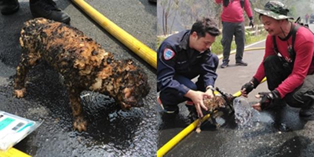 สลด! ลูกสุนัขโดนไฟป่าลามคลอก กู้ภัยชี้เกิดจากน้ำมือมนุษย์ วอนคิดสักนิดก่อนเผา