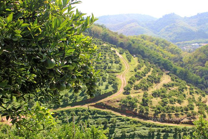 วิวสวยๆ ของสวนส้มโชกุน