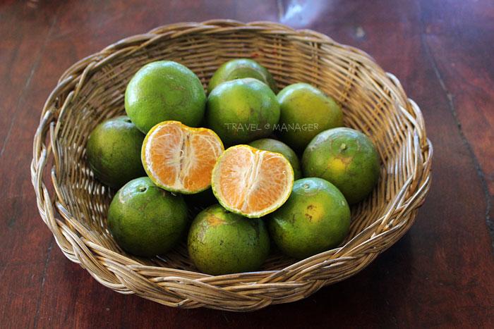 ส้มโชกุน ของดีเมืองเบตง
