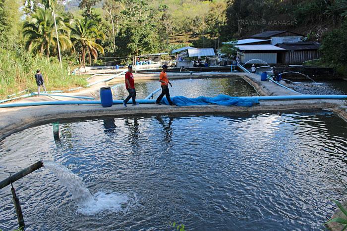 หมู่บ้านปลาในสายน้ำไหล ทำบ่อปลาแบบขั้นบันไดเช่นเดียวกัน