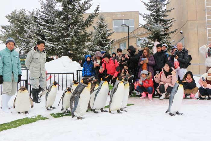 นักท่องเที่ยวชมเพนกวินเดินขบวน