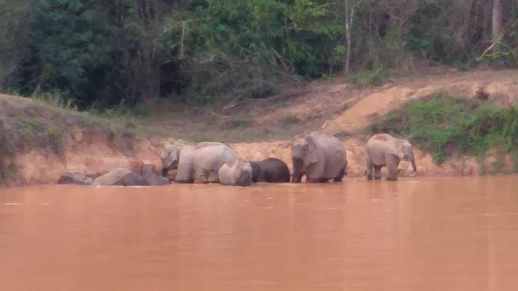 ภาพช้างป่าเล่นน้ำคลายร้อน ในพื้นที่อุทยานแห่งชาติแก่งกระจาน เจ้าหน้าที่ดูแลความปลอดภัยเข้ม