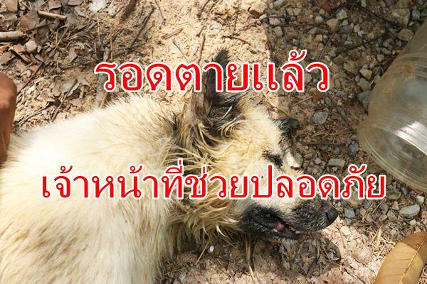 รอดตายแล้วสุนัขหัวติดขวดโหลที่ชุมพร เจ้าหน้าที่ช่วยปลอดภัย