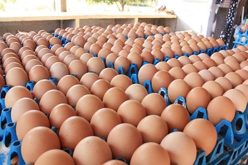 ปลื้ม!แนวทางแก้ปัญหาไข่ไก่ ช่วยดันราคาเพิ่ม
