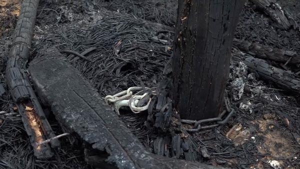 อนาถ! ล่ามโซ่หมาไว้เถียงนา เพื่อนบ้านเผาอ้อยไฟปลิวคลอกเหลือแต่ซาก