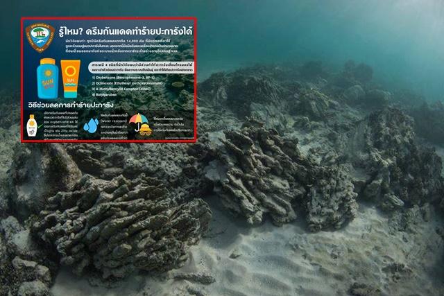 """""""สำนักอุทยานแห่งชาติ"""" แนะ เลี่ยงครีมกันแดดทำร้ายปะการัง หลังพบวิจัยสารจากครีมทำร้ายปะการังได้"""