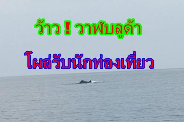 วาฬบลูด้าโผล่อวดโฉมให้นักท่องเที่ยวชมรับสงกรานต์