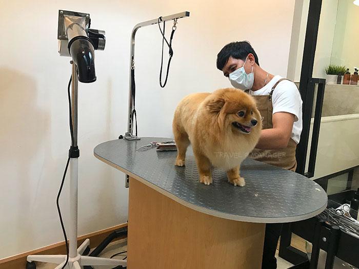 บริการตัดขนใน HATO Pet Wellness Center