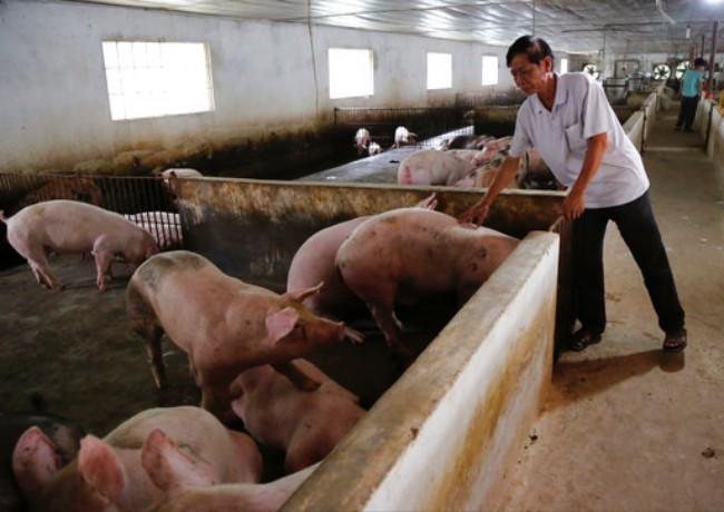บริษัทจีนทำข้อตกลงตั้งฟาร์มหมูในเวียดนามเล็งผลิตหมูเกือบล้านตัวต่อปี