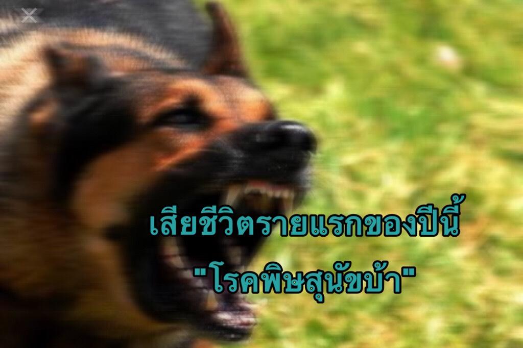 พบผู้เสียชีวิตรายแรกของปี 62 ด้วยโรคพิษสุนัขบ้า