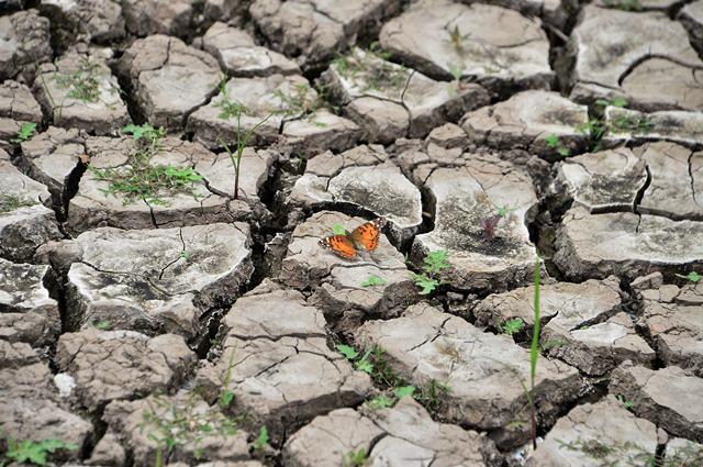 ภาพผีเสื้อบนผืนดินแห้งๆ ที่อ่างเก็บน้ำลอสลอเรเรสในวันโลกในกรุงเตกูซิกัลปาของฮอนดูรัส (22 เม.ษ.)