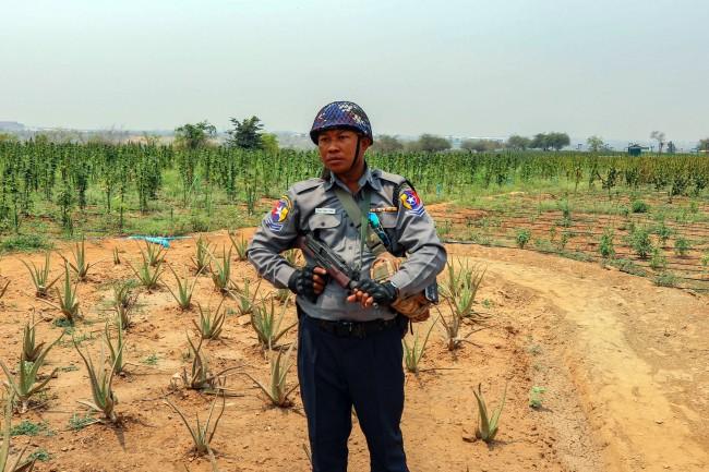 ทนายความชี้ตำรวจพม่าสับสนชายอเมริกันทำไร่กัญชงได้รับอนุญาตถูกต้อง