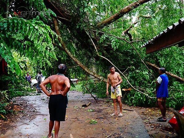"""พายุซัด! """"ต.กงหรา"""" บ้านเสียหาย 60 หลัง พืชเกษตรล้มระเนระนาด"""
