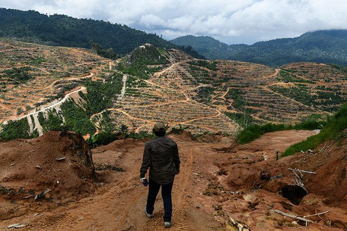 ด้วยความต้องการบริโภคทุเรียนที่เพิ่มขึ้นของชาวจีน ทำให้ในมาเลเซียเกิดการรุกพื้นที่ป่า เพื่อขยายพื้นที่เพาะปลูกทุเรียนในเขต Raub รัฐปาหัง ซึ่งห่างจากกัวลาลัมเปอร์ราว 100 กิโลเมตร โดยภาพนี้ทางองค์กรพัฒนาเอกชนถ่ายไว้เมื่อ 19 ธันวาคม 2561 (ภาพเอเอฟพี)