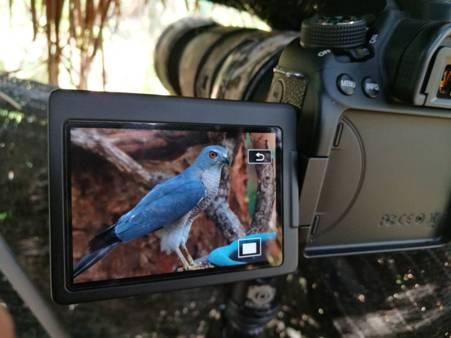ซุ่มโป่งกันเพลิน!ช่างภาพแห่ทำบังไพรถ่ายภาพนกลงกินน้ำในป่าดอยสุเทพฯหลัง มช.คึกคัก