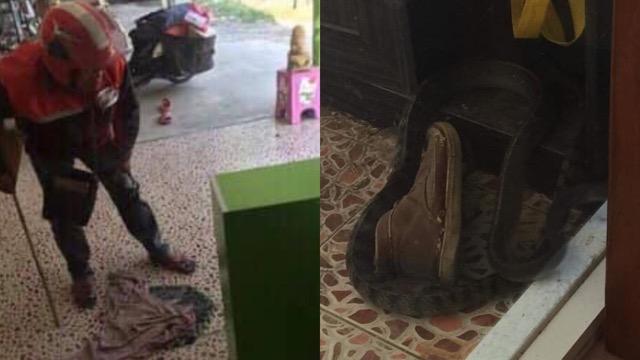 ชื่นชม! ไปรษณีย์ไทยส่งของอาชีพหลัก ช่วยไล่จับงูอาชีพเสริม