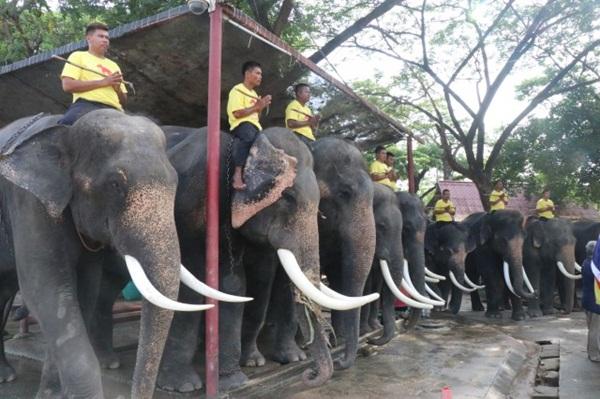 วังช้างอยุธยาฯ จัดพิธีปัดรังควาญ เพื่อเป็นสิริมงคลก่อนร่วมขบวนเดินเทิดพระเกียรติ คชสาร