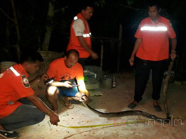 หน่วยกู้ภัยมูลนิธิอริโยสามัคคีนาทวีเข้าจับงูเหลือมบุกชุมชนหน้าค่าย