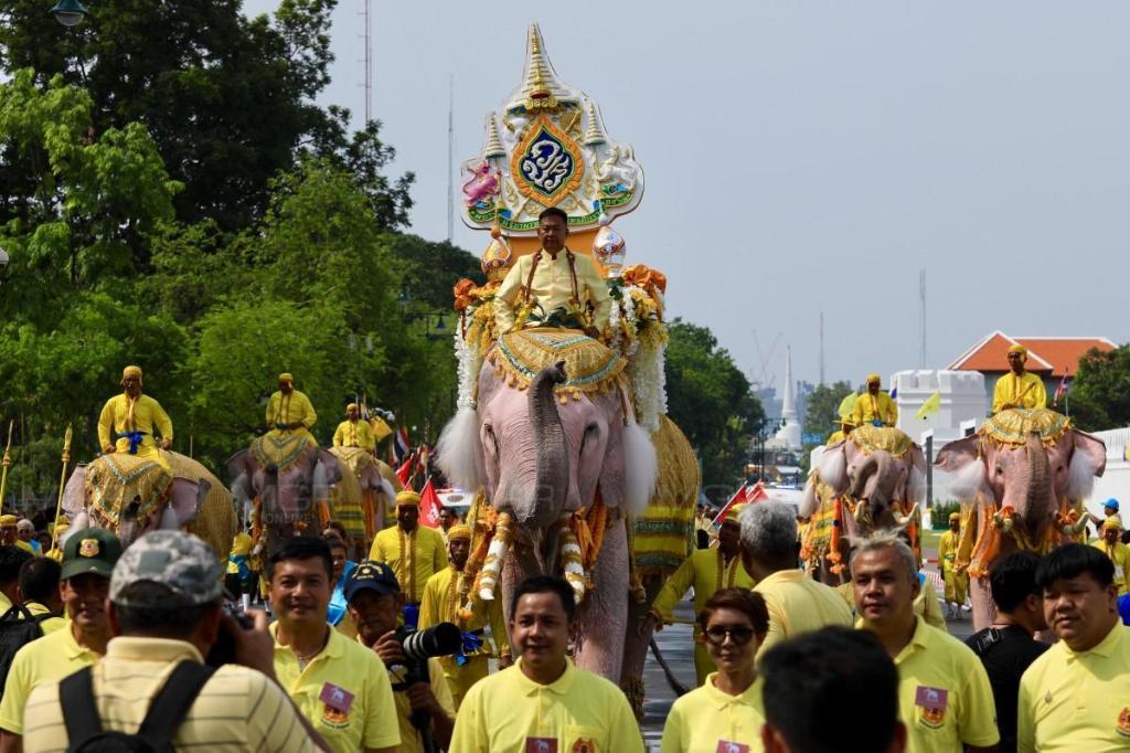 ช้างคชลีลา 11 เชือก เดินเทิดไท้องค์ราชันย์ ถวายพระพรชัยมงคล ในหลวงรัชกาลที่ ๑๐
