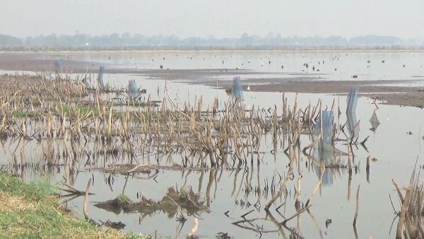สภาพกว๊านพะเยา ที่แห้งขอดทำให้ชาวบ้านออกหาปลาได้เป็นจำนวนมาก