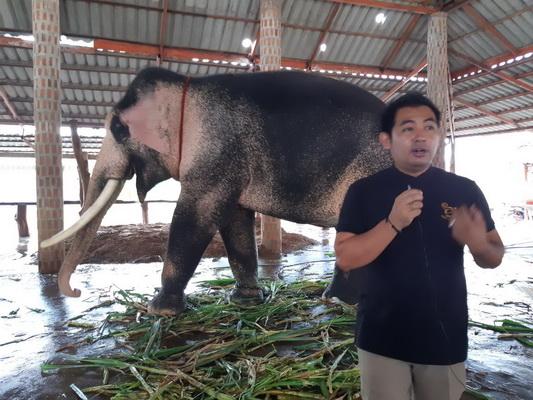 ธนบดี พรหมสุข ผู้จัดการศูนย์อนุรักษ์ช้างช้างทองคำ จ.มหาสารคาม