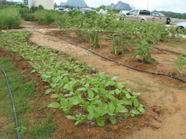 พังงานำรองเปิดโครงการเรียนรู้เกษตรผสมผสานตามศาสตร์พระราชา