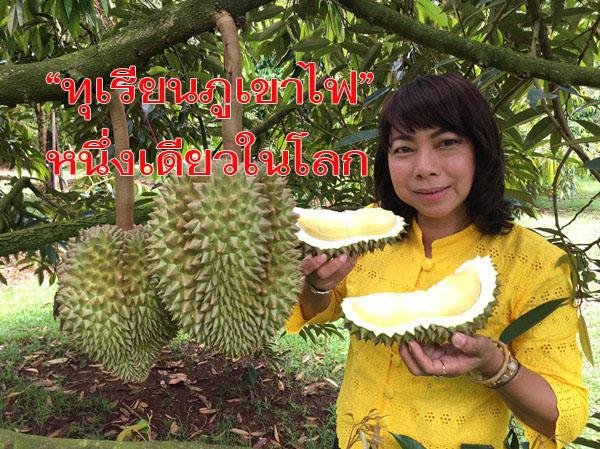 กระหึ่มโลก! นักท่องเที่ยวไทย-เทศแห่จองทัวร์ชิมทุเรียนภูเขาไฟศรีสะเกษยาวเหยียด