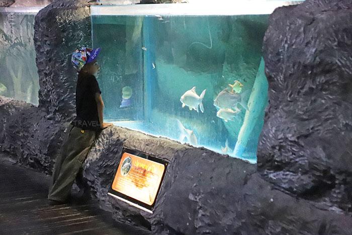 เด็กๆ สามารถยืนชมปลาได้อย่างใกล้ชิด