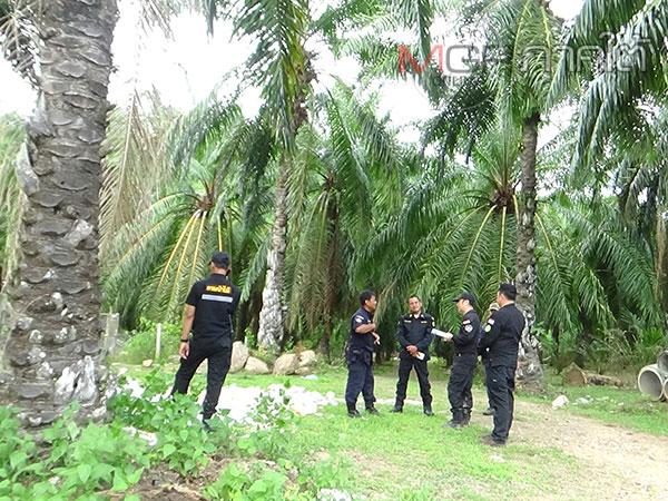 ชุดพยัคฆ์ไพรเข้าตรวจสอบสวนปาล์มนายทุนต่างชาติเนื้อที่ 400 ไร่ เชื่อเป็นการบุกรุกป่า