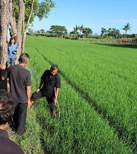 """เกษตรฯ จับมือ GIZ เปิดตลาด """"ข้าวเบอร์ 5 : ข้าวรักษ์โลก"""""""
