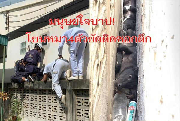 มนุษย์ใจบาป! โยนหมา 4 ตัวยัดติดซอกตึกขยับไม่ได้ร้องโหยหวน กู้ภัยระดมช่วยยากลำบาก