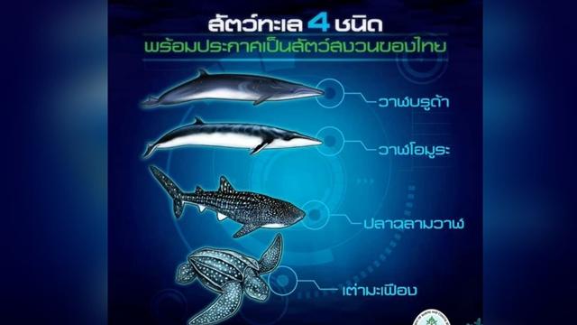"""""""ดร.ธรณ์"""" ปลื้ม วาฬบรูด้า-วาฬโอมูระ-เต่ามะเฟือง-ฉลามวาฬ ขึ้นเป็นสัตว์สงวน"""