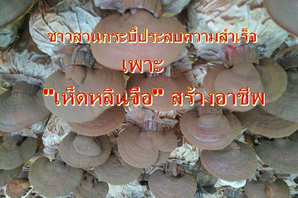 เกษตรกรชาวกระบี่หันเพาะเห็นหลินจือแดงขายสร้างรายได้เพียบ