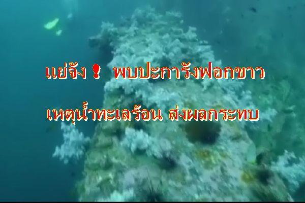 มาอีกแล้ว ! แนวปะการังฟอกขาวที่กระบี่ เหตุอุณหภูมิสูง