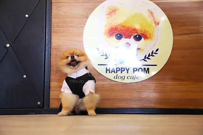 """Happy Pom Dog Café"" คาเฟ่น้องหมาปอมฯ หนึ่งเดียวในประเทศไทย"