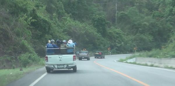 มาเป็นคาราวานทุกวัน!ชาวบ้านเดินทางข้ามจังหวัด แห่หาเห็ดถอบป่ากุ่มเนิ้งเมืองเถินคึกคัก