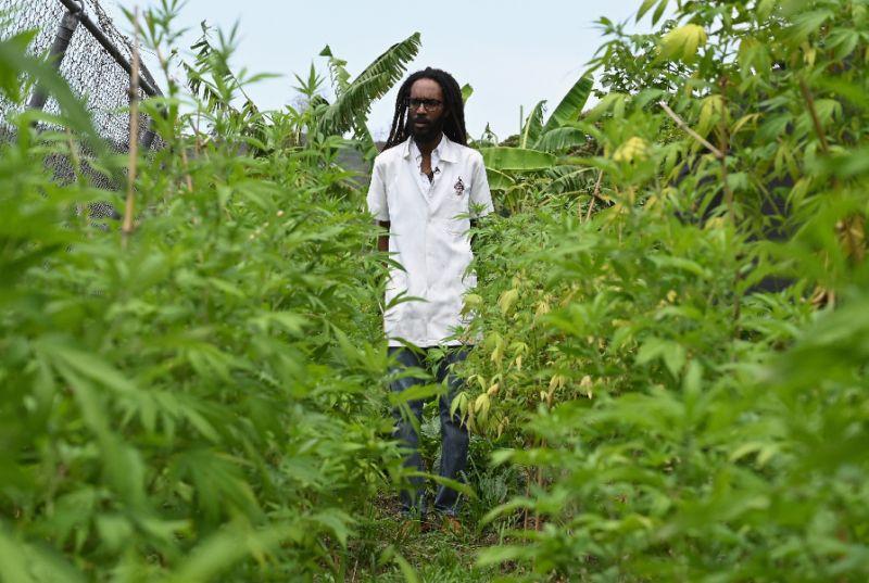 ดร.มาเชล เอมานูเอล ภายในสวนกัญชาของเขา (AFP Photo/Angela Weiss)