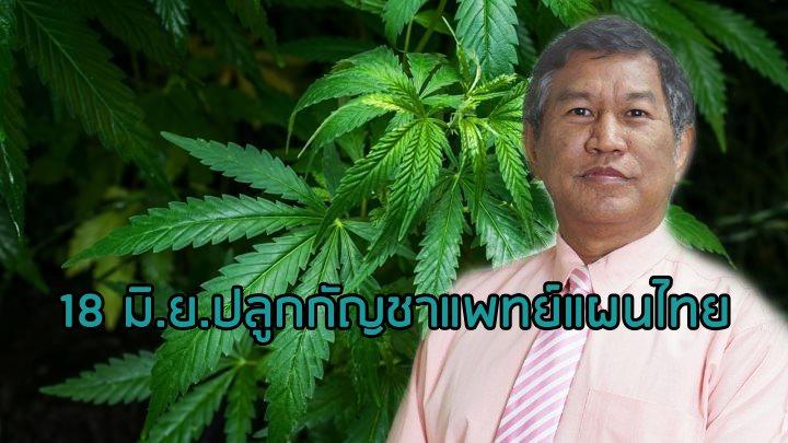"""ดีเดย์ 18 มิ.ย. ลุยปลูก """"กัญชา"""" ใช้ทางแพทย์แผนไทยครั้งแรก รพ.พระอาจารย์ฝั้นฯ ลุ้นของกลาง ป.ป.ส.ผลิตเครื่องยากลาง"""