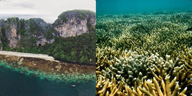 ดร.ธรณ์ อวดภาพแนวปะการังเกาะยูงฟื้นตัวมีชีวิตชีวา หลังปิดนานเกาะกว่า 3 ปี