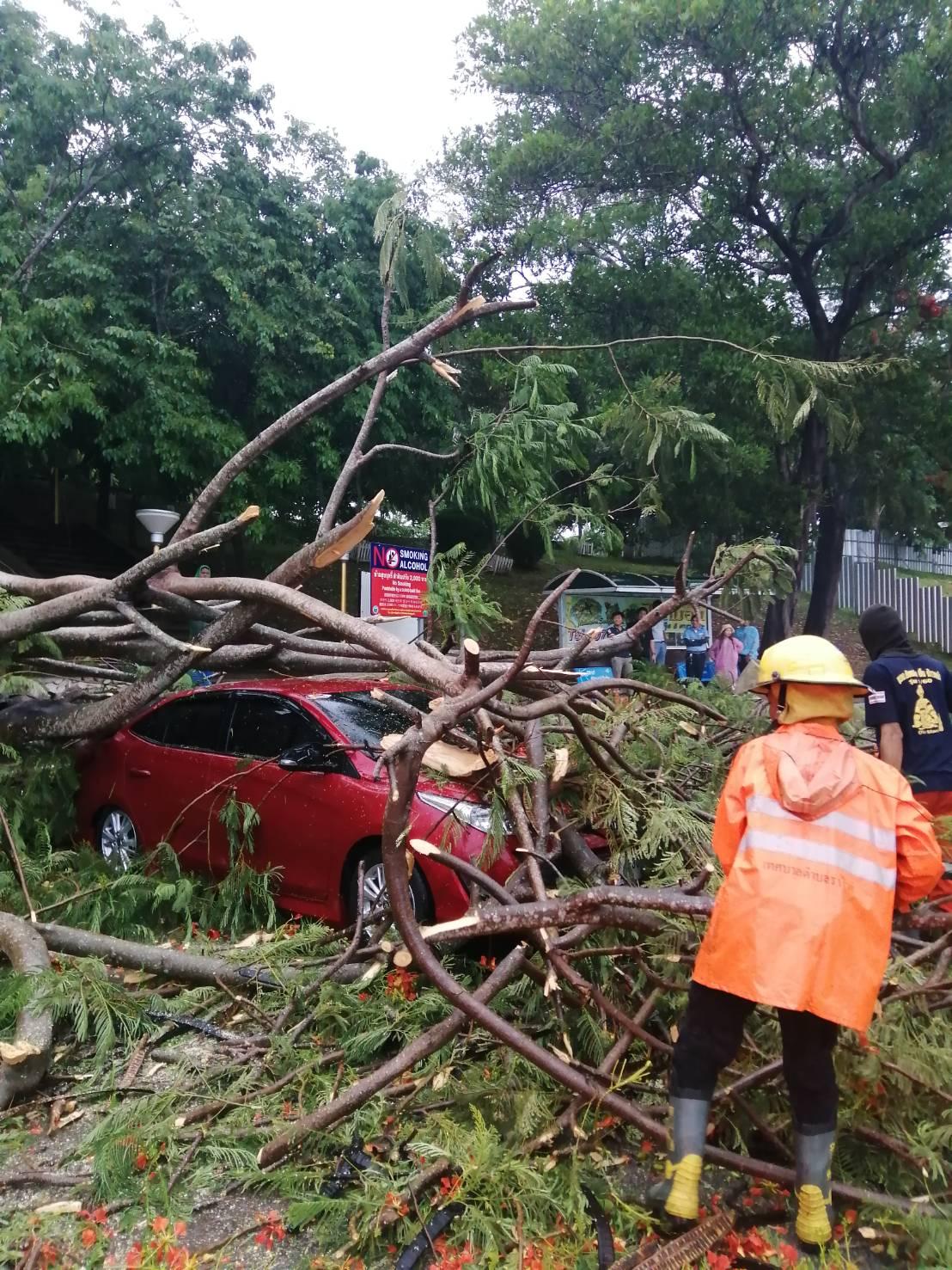 ภูเก็ตฝนตกหนักต้นไม้ล้มทับบ้าน - รถเสียหาย ปภ. เตือนระวังน้ำป่าไหลหลาก